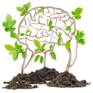 Plants growing from soil heaps forming brain